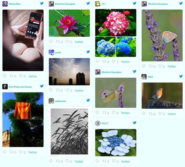 embed twitter feed in wordpress