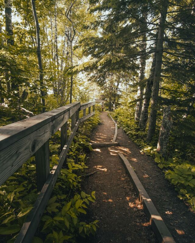 Winding through the forest, not another soul for miles #hike