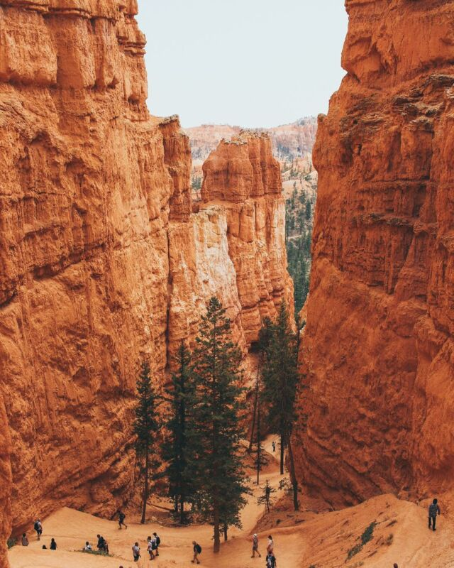 Giant walls of sandy rock tower over the trees below #canyon