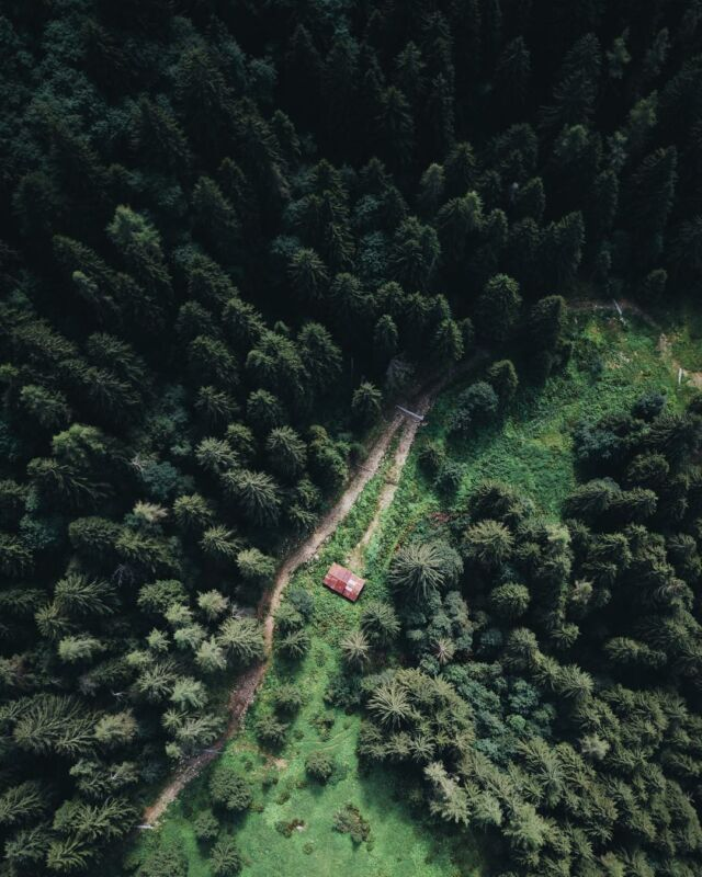 A view from above; a lonely residence in the vast, dense woods #trees
